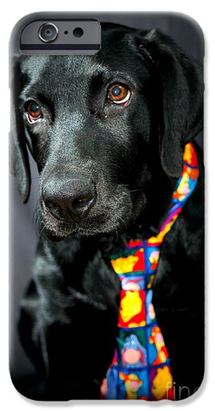 Black Dog iPhone Cases - Black Lab Portrait iPhone Case by Catherine Reusch  Daley