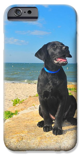 Black Dog Photographs iPhone Cases - Black Lab Puppy iPhone Case by Catherine Reusch  Daley