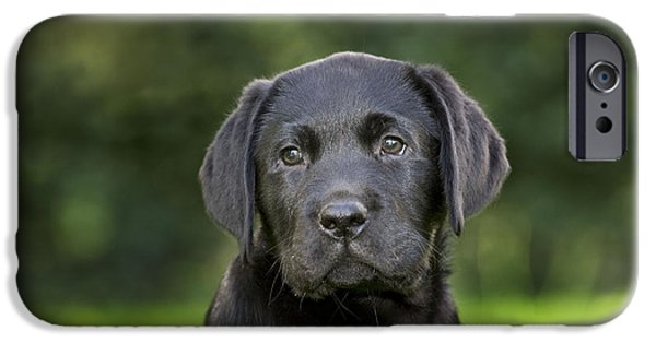 Recently Sold -  - Dog Close-up iPhone Cases - Black Labrador Puppy iPhone Case by Johan De Meester