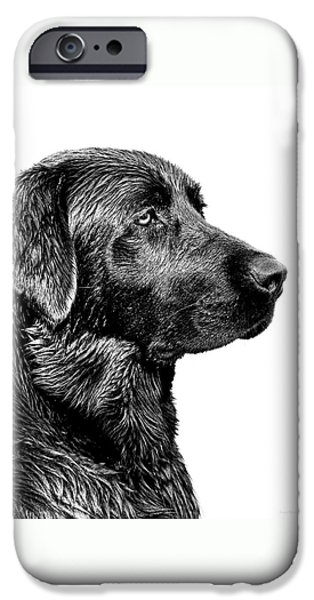 Monotone Photographs iPhone Cases - Black Labrador Retriever Dog Monochrome iPhone Case by Jennie Marie Schell
