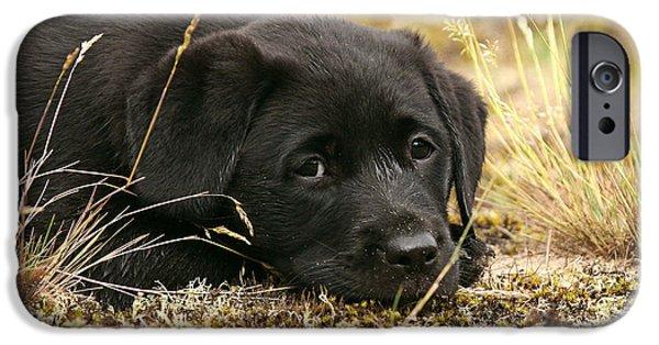 Dog Photos iPhone Cases - Black Labrador Retriever puppy lying in moss iPhone Case by Dog Photos