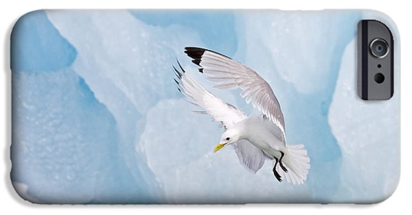 Flying Seagull iPhone Cases - Black-legged Kittiwake Landing iPhone Case by Dickie Duckett