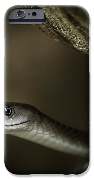 Black Mamba on rock iPhone Case by Rick Budai