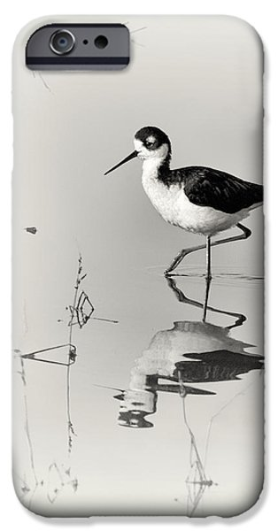 Fauna iPhone Cases - Black-necked Stilt at Carson Lake Wetlands iPhone Case by Priscilla Burgers
