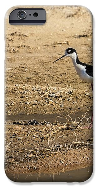Black-necked Stilt iPhone Case by Robert Bales