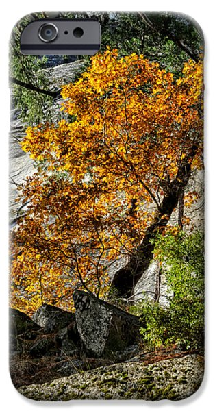 Fall iPhone Cases - Black Oak iPhone Case by Cat Connor