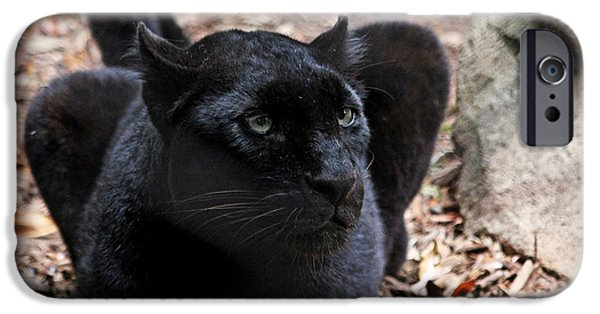 Recently Sold -  - Power iPhone Cases - Black Panther iPhone Case by Judy Vincent