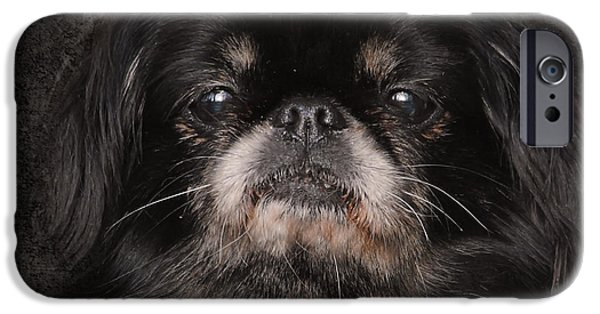 Pekingese iPhone Cases - Black Pekingese iPhone Case by Jai Johnson