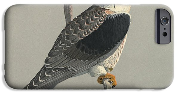 Ethiopia iPhone Cases - Black Shouldered Kite iPhone Case by Louis Agassiz Fuertes