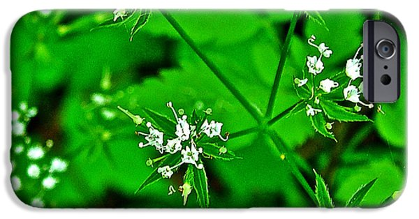 Natchez Trace Parkway iPhone Cases - Black Snakeroot in Donivan Slough at Mile 283 on Natchez Trace Parkway-Mississippi  iPhone Case by Ruth Hager