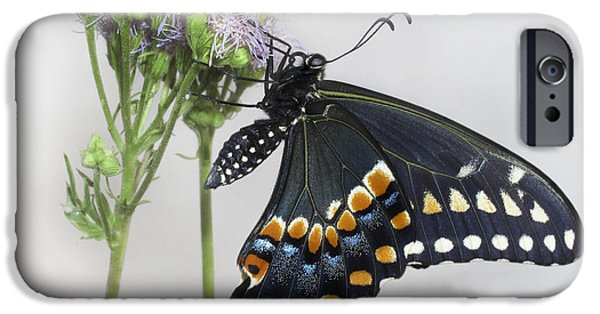 Blue Swallowtail iPhone Cases - Black Swallowtail II iPhone Case by David and Carol Kelly