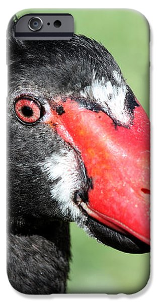 Black Swan iPhone Case by Shane Bechler