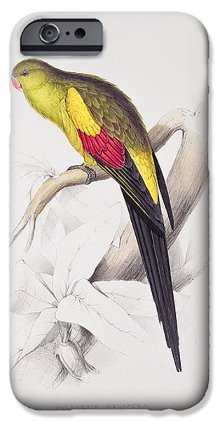 Animal Drawings iPhone Cases - Black Tailed Parakeet iPhone Case by Edward Lear