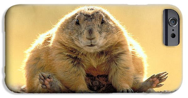 Prairie Dogs iPhone Cases - Black-tailed Prairie Dog iPhone Case by Art Wolfe