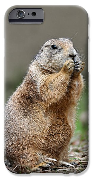 Smithsonian National Zoological Park iPhone Cases - Black Tailed Prairie Dog iPhone Case by  Joe Ravi
