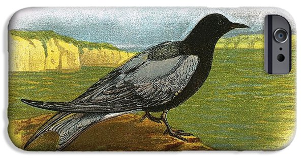 Tern iPhone Cases - Black Tern iPhone Case by English School