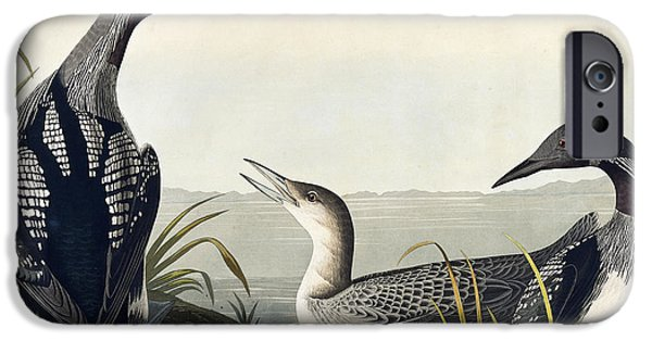 Grass Drawings iPhone Cases - Black throated Diver  iPhone Case by John James Audubon