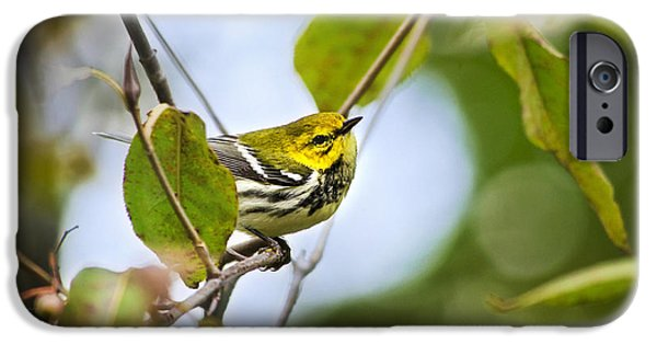 Warbler iPhone Cases - Black-Throated Green Warbler iPhone Case by Christina Rollo