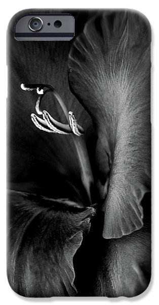 Gladiolas iPhone Cases - Black Velvet Gladiolia Flower iPhone Case by Jennie Marie Schell