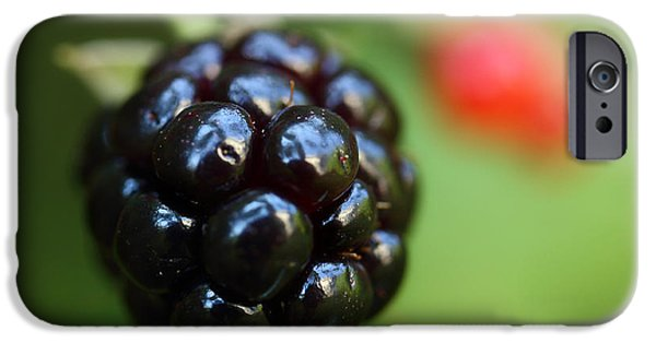 Wild iPhone Cases - Blackberry On The Vine iPhone Case by Michael Eingle