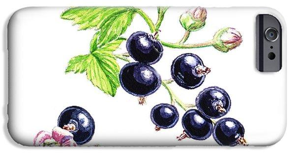 Nature Study Paintings iPhone Cases - Blackcurrant Botanical Study iPhone Case by Irina Sztukowski