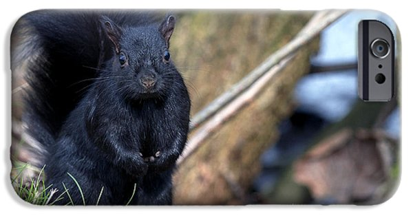 Bushy Tail iPhone Cases - Blackie iPhone Case by Sharon  Talson