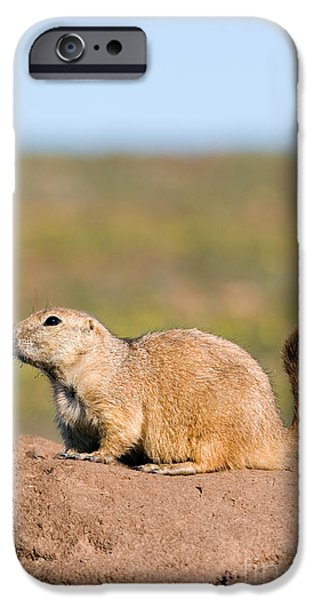 Prairie Dogs iPhone Cases - Blacktailed Prairie Dog iPhone Case by Gregory G. Dimijian, M.D.