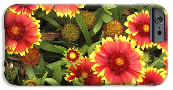 Annpowellart iPhone Cases - Blanket Flowers  One - photography iPhone Case by Ann Powell