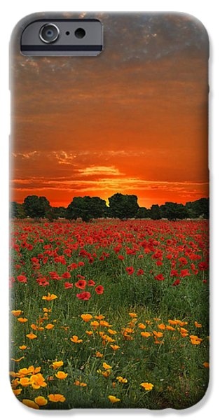 Meadow Photographs iPhone Cases - Blaze of Glory iPhone Case by Lynn Bauer