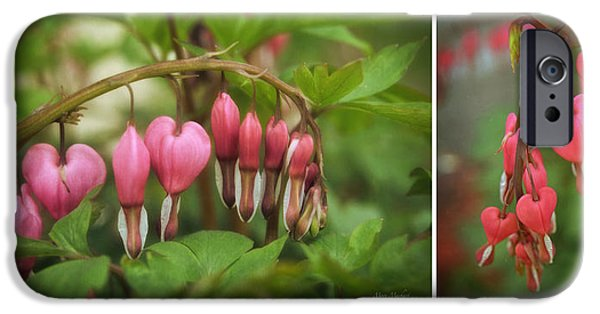 Bleeding Hearts iPhone Cases - Bleeding Hearts Collage iPhone Case by Mary Machare