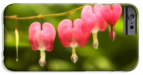 Fauna iPhone Cases - Bleeding Hearts iPhone Case by Sebastian Musial