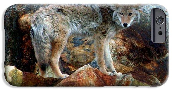 Wild Animals iPhone Cases - Blending In Nature iPhone Case by Karen Wiles