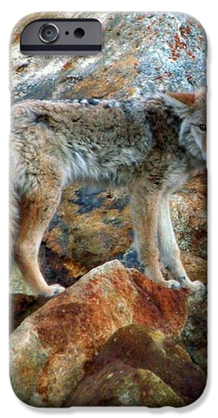 Blending In Nature iPhone Case by KAREN WILES