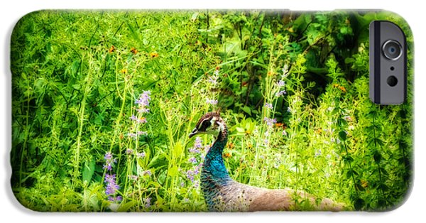 Peafowl iPhone Cases - Blending In iPhone Case by Wim Lanclus