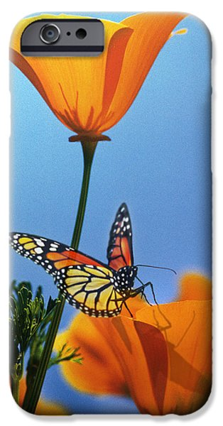 Sun Rays Digital Art iPhone Cases - Blessed by the Sun iPhone Case by Evie Cook