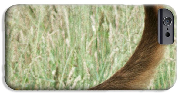 Dog Close-up iPhone Cases - Bloodhound Tail iPhone Case by John Daniels