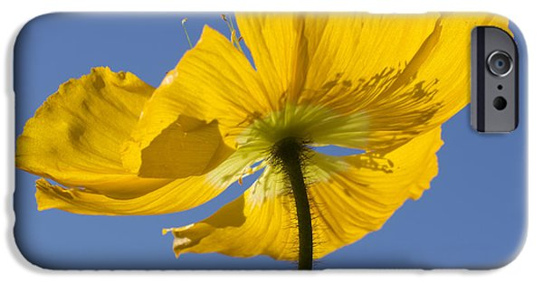 Close Focus Nature Scene iPhone Cases - Bloom Time iPhone Case by Heidi Smith