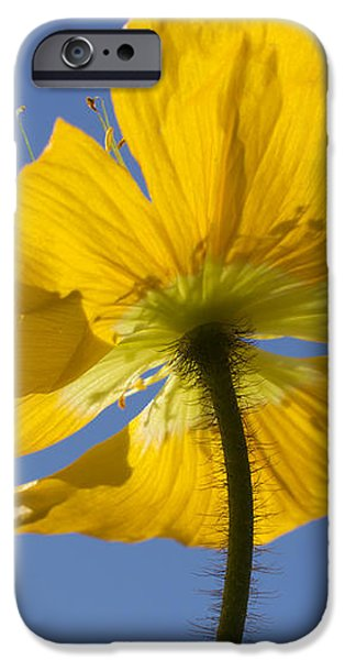 Bloom Time iPhone Case by Heidi Smith