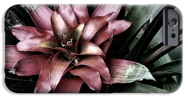 Artistic Photography iPhone Cases - Bloom iPhone Case by Tom Prendergast