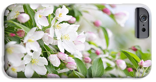 Delicate iPhone Cases - Blooming apple tree iPhone Case by Elena Elisseeva