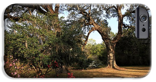 Historic Site iPhone Cases - Blooming at the Plantation iPhone Case by John Rizzuto