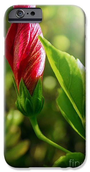 Nectar iPhone Cases - Blooming Flower  iPhone Case by Carlos Caetano