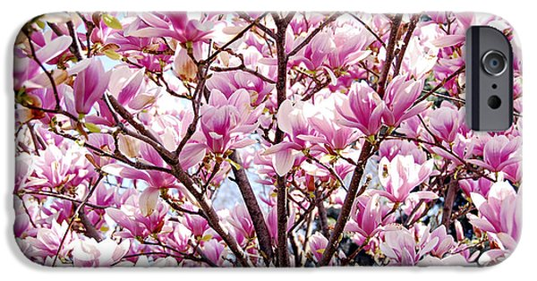 Spring iPhone Cases - Blooming magnolia iPhone Case by Elena Elisseeva