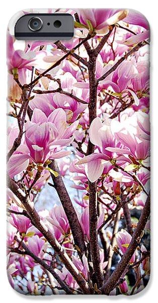Blooming magnolia iPhone Case by Elena Elisseeva