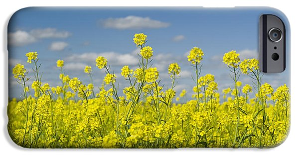 Dave iPhone Cases - Blooming Mustard Field Ponteix iPhone Case by Dave Reede