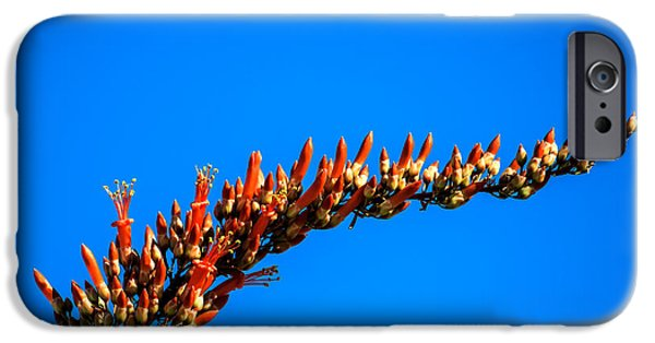 Haybale iPhone Cases - Blooming Ocotillo iPhone Case by Robert Bales