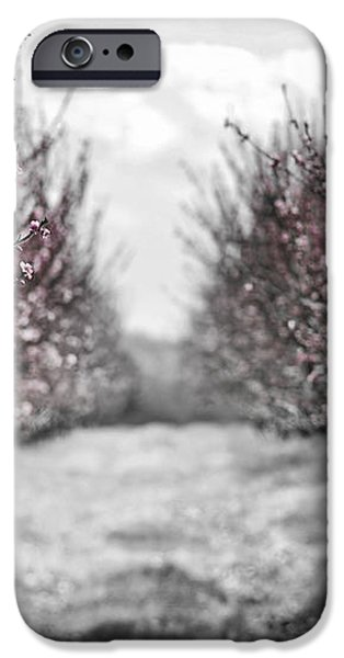 Blooming peach orchard iPhone Case by Elena Elisseeva