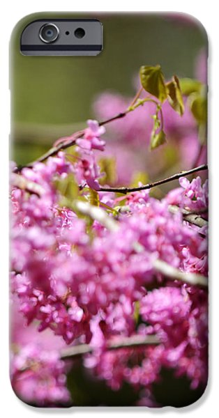 Blooming Redbud Tree Cercis canadensis iPhone Case by Rebecca Sherman
