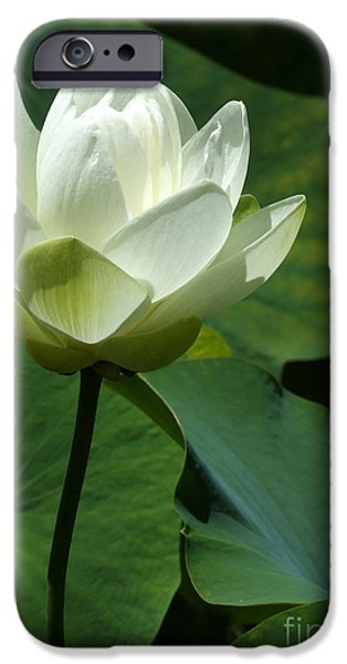Florida Flowers Photographs iPhone Cases - Blooming White Lotus iPhone Case by Sabrina L Ryan
