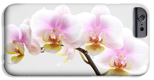 Nature Divine iPhone Cases - Blooms on White iPhone Case by Juergen Roth